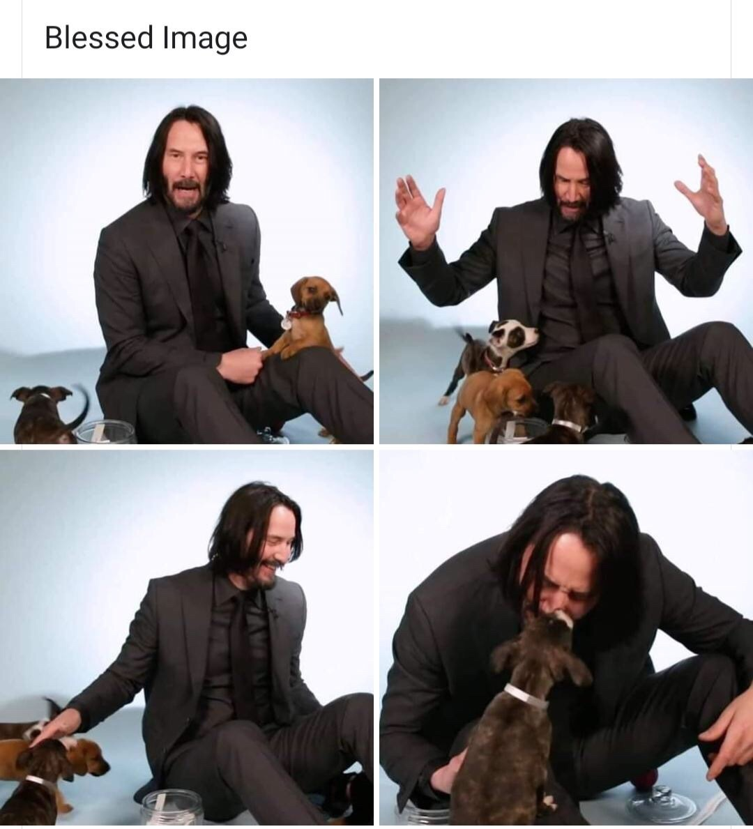 Keanu Reeves with Puppies